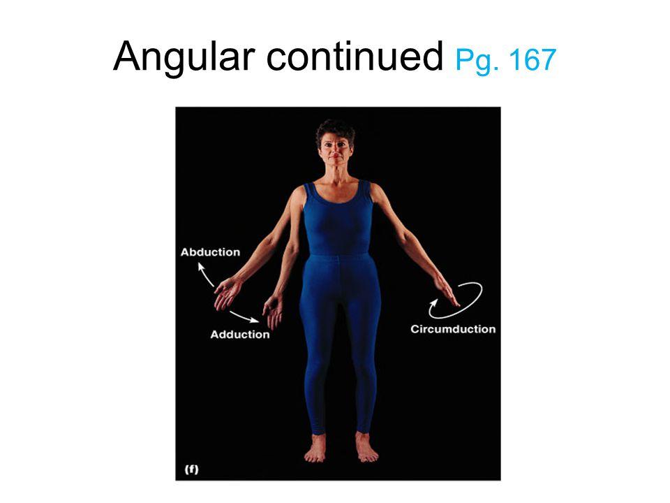 Angular continued Pg. 167