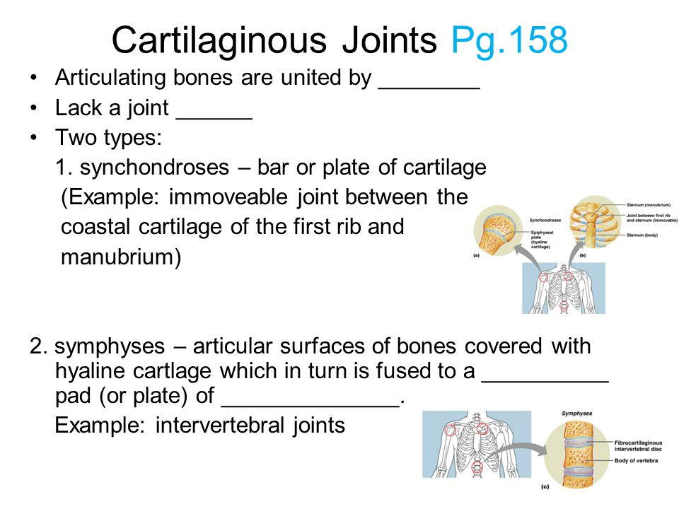 Cartilaginous Joints Pg.158 Articulating bones are united by ________ Lack a joint ______ Two types: 1. synchondroses – bar or plate of cartilage (Exa