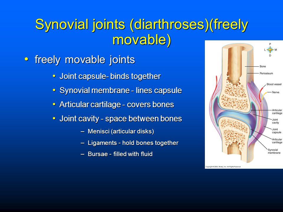 Cadaver joint