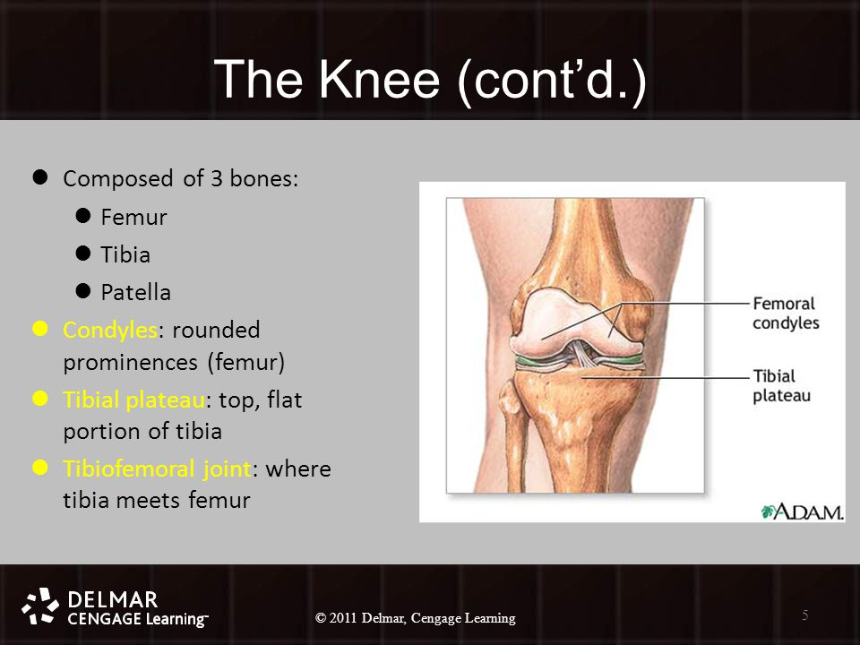 © 2010 Delmar, Cengage Learning 5 © 2011 Delmar, Cengage Learning The Knee (cont'd.) Composed of 3 bones: Femur Tibia Patella Condyles: rounded prominences (femur) Tibial plateau: top, flat portion of tibia Tibiofemoral joint: where tibia meets femur 5