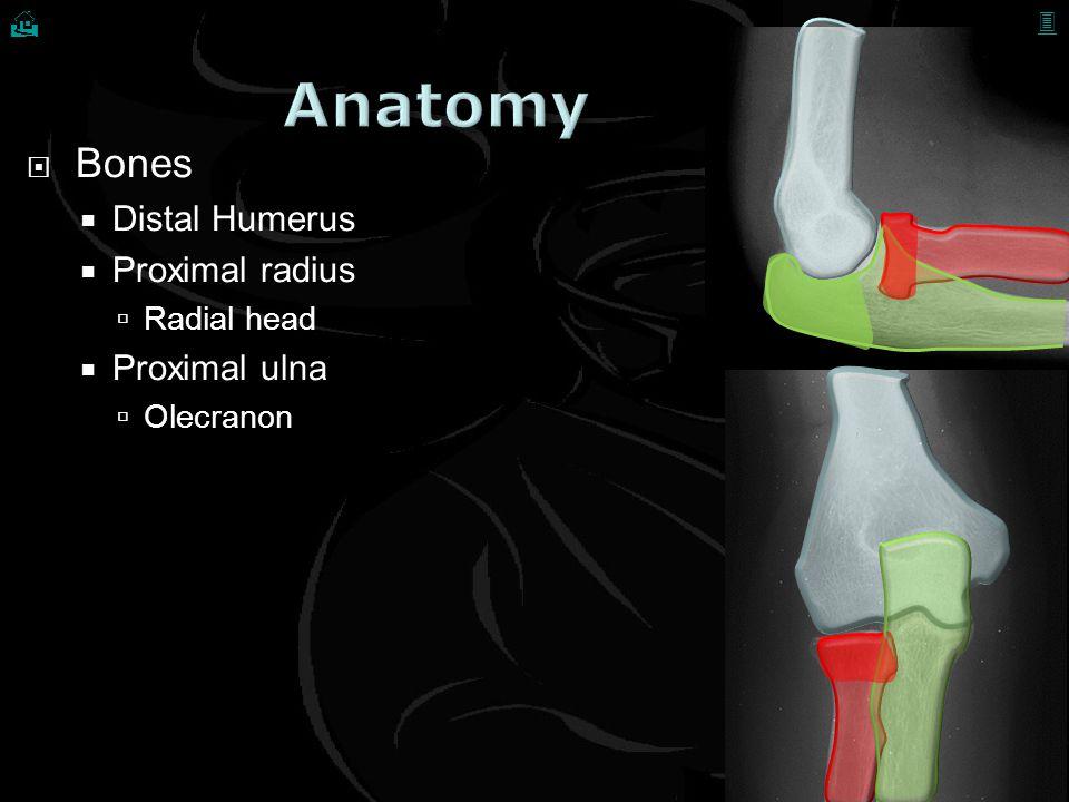  Bones  Distal Humerus  Proximal radius  Radial head  Proximal ulna  Olecranon  