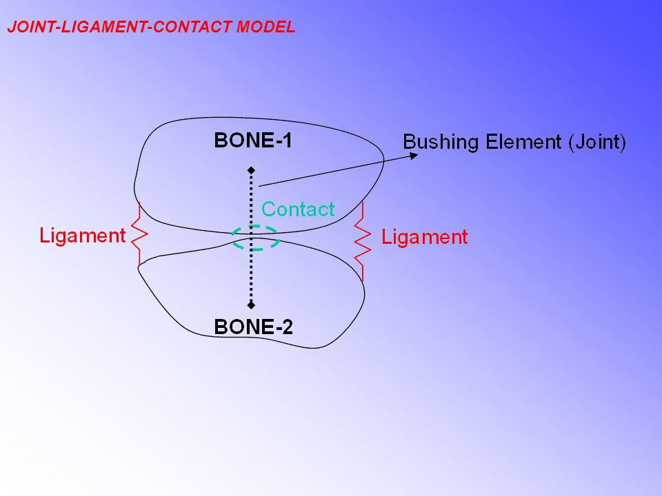 JOINT-LIGAMENT-CONTACT MODEL