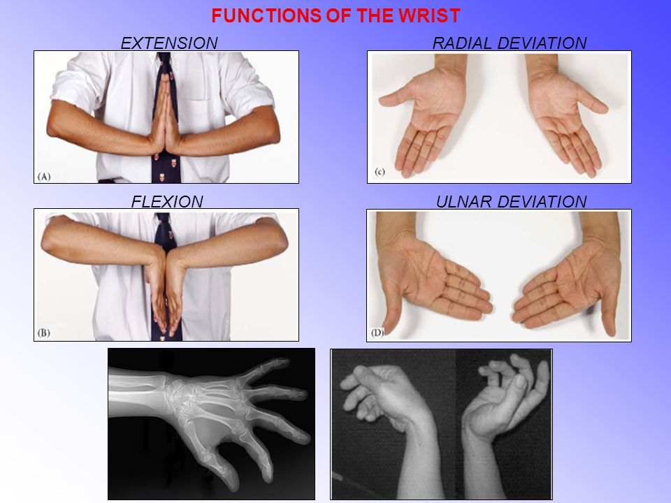 FUNCTIONS OF THE WRIST FLEXION EXTENSIONRADIAL DEVIATION ULNAR DEVIATION