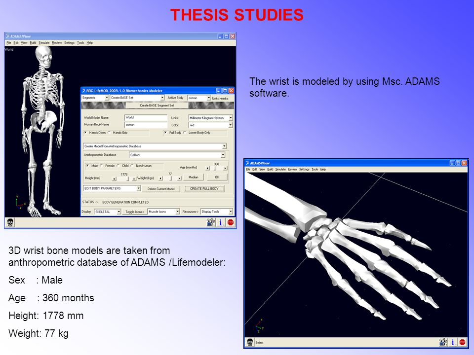 THESIS STUDIES 3D wrist bone models are taken from anthropometric database of ADAMS /Lifemodeler: Sex : Male Age : 360 months Height: 1778 mm Weight: 77 kg The wrist is modeled by using Msc.