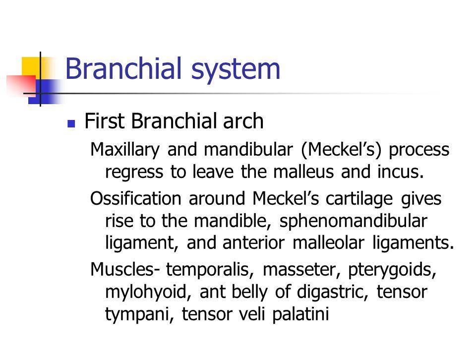 Midline Neck Masses Thyroid nodules Thyroglossal duct cyst Cervical Thymic Cyst Plunging ranula