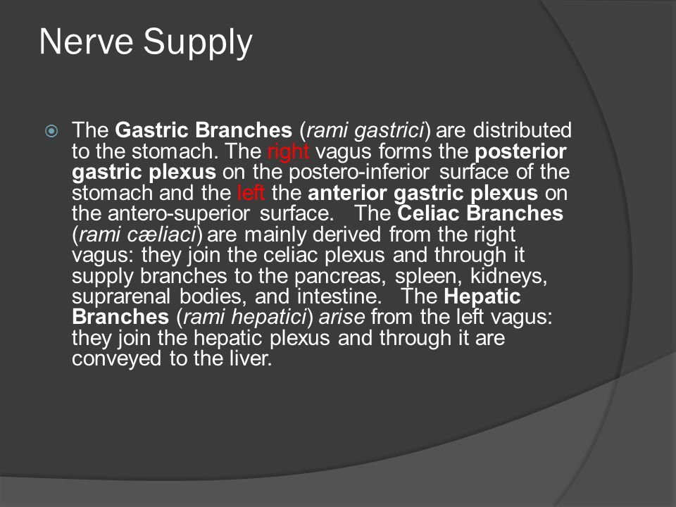Nerve Supply  The Gastric Branches (rami gastrici) are distributed to the stomach. The right vagus forms the posterior gastric plexus on the postero-