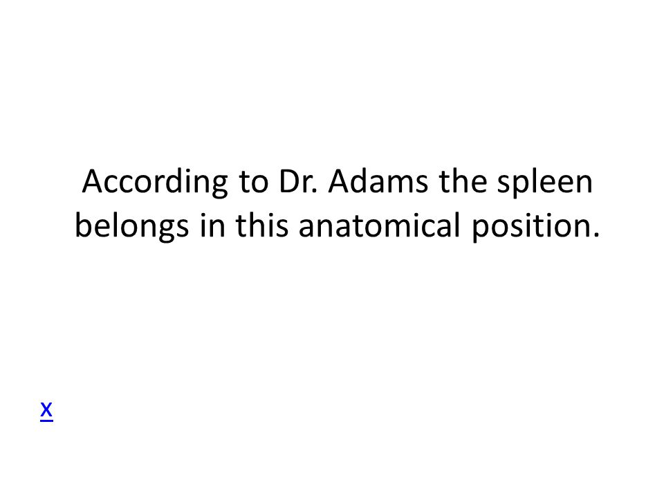 According to Dr. Adams the spleen belongs in this anatomical position. x