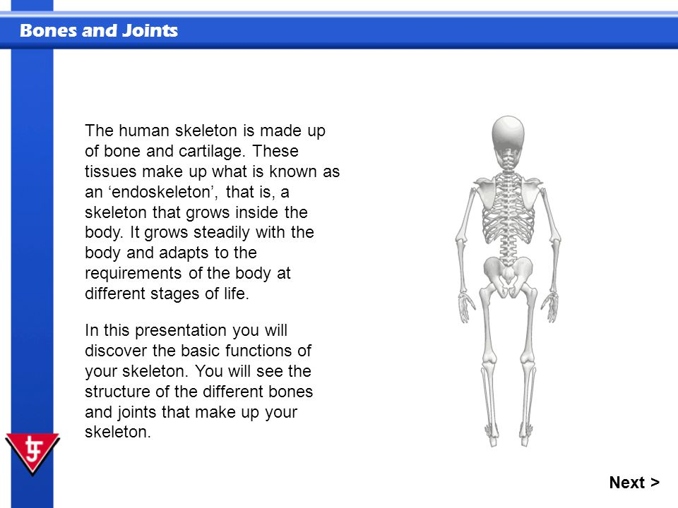 Bones and Joints Next > The human skeleton is made up of bone and cartilage.