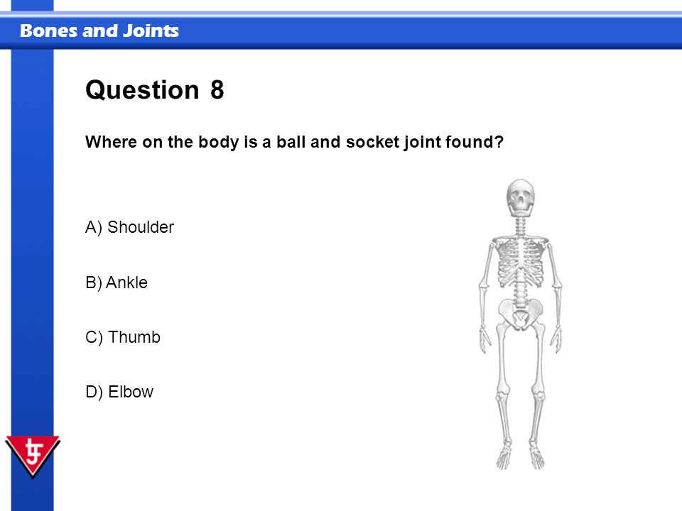 Bones and Joints 8 Where on the body is a ball and socket joint found.
