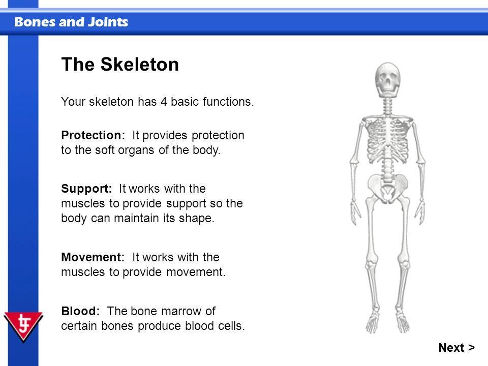 Bones and Joints Humans have endoskeletons.