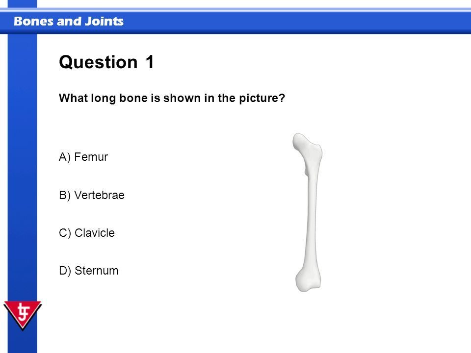 Bones and Joints 1 What long bone is shown in the picture? Question A) Femur B) Vertebrae C) Clavicle D) Sternum