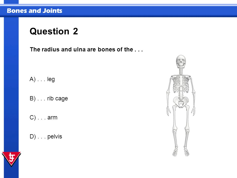 Bones and Joints 2 The radius and ulna are bones of the... Question A)... leg B)... rib cage C)... arm D)... pelvis
