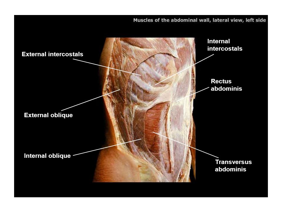 Inferior vena cava Esophagus Respiratory diaphragm Aorta (descending)