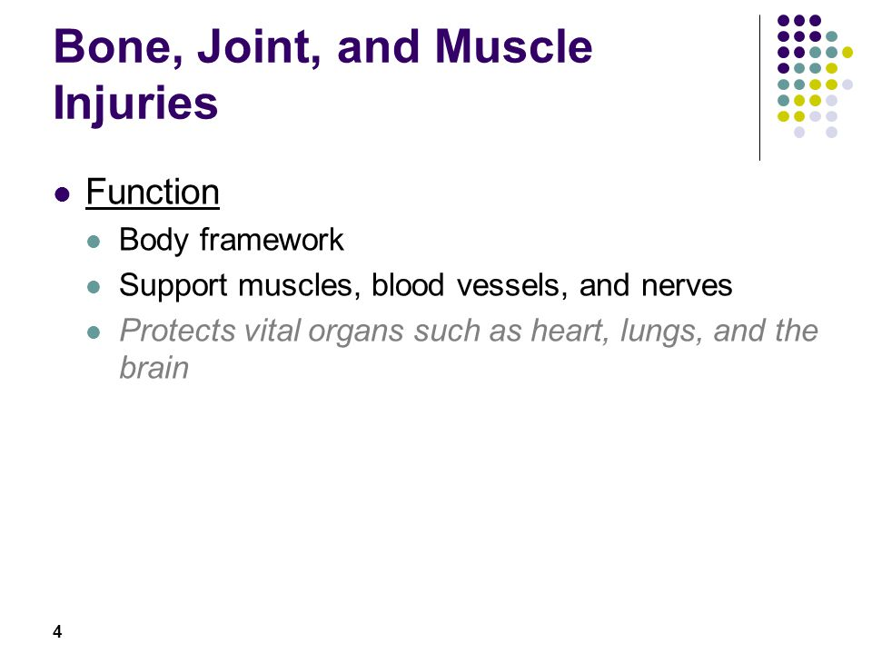 4 Function Body framework Support muscles, blood vessels, and nerves Protects vital organs such as heart, lungs, and the brain Bone, Joint, and Muscle