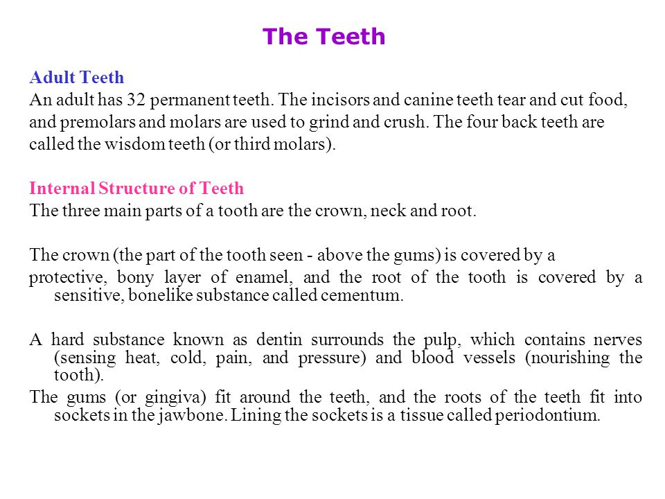 Permanent teeth => 32 (Adult) Permanent teeth => 32 (Adult) Incisors: Canines : Premolars: Molars (include wisdom teeth) Incisors: Canines : Premolars: Molars (include wisdom teeth) 4/4 : 2/2 : 4/4 : 6/6 4/4 : 2/2 : 4/4 : 6/6
