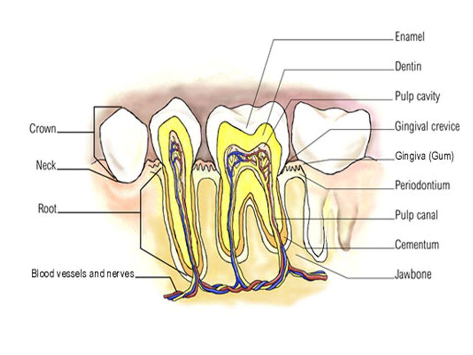 Other Official Dental Products Zinc Chloride (ZnCl 2 ) Category: Astringent; Dentin desensitizer.