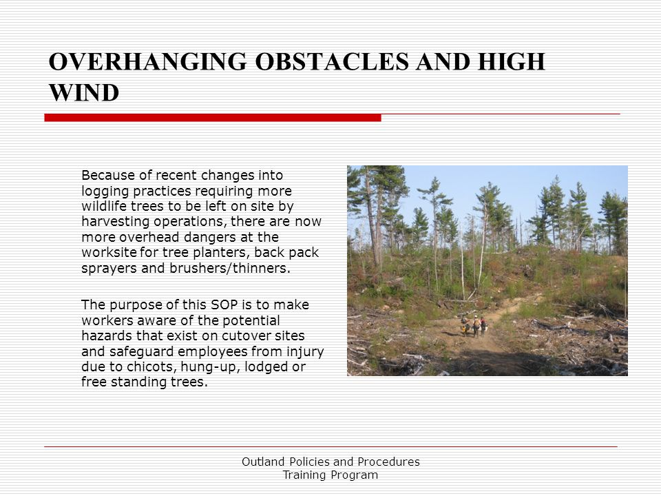 OVERHANGING OBSTACLES AND HIGH WIND Because of recent changes into logging practices requiring more wildlife trees to be left on site by harvesting operations, there are now more overhead dangers at the worksite for tree planters, back pack sprayers and brushers/thinners.