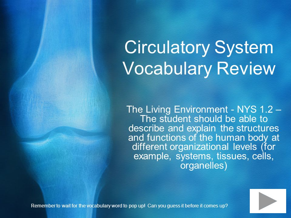Circulatory System Vocabulary Review The Living Environment - NYS 1.2 – The student should be able to describe and explain the structures and functions of the human body at different organizational levels (for example, systems, tissues, cells, organelles) Remember to wait for the vocabulary word to pop up.