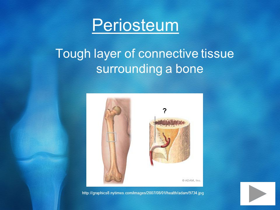 Periosteum Tough layer of connective tissue surrounding a bone .