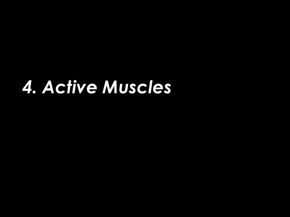 4. Active Muscles