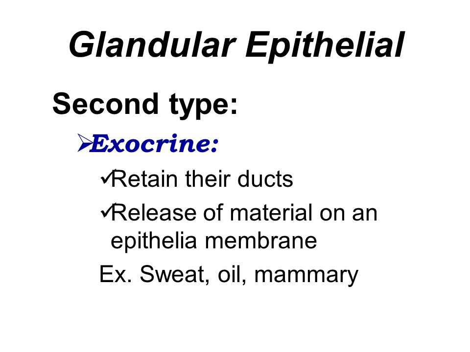 Glandular Epithelial Second type:  Exocrine: Retain their ducts Release of material on an epithelia membrane Ex. Sweat, oil, mammary