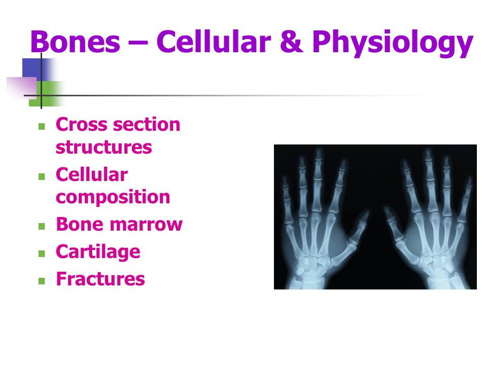 Bones – Cellular & Physiology Cross section structures Cellular composition Bone marrow Cartilage Fractures