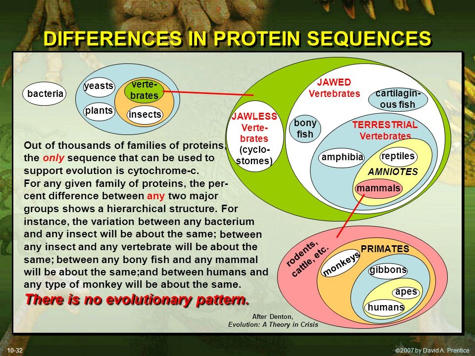  2007 by David A. Prentice DIFFERENCES IN PROTEIN SEQUENCES Out of thousands of families of proteins, the only sequence that can be used to support