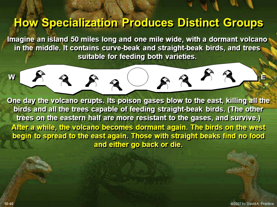  2007 by David A. Prentice How Specialization Produces Distinct Groups 10-40 Imagine an island 50 miles long and one mile wide, with a dormant volca