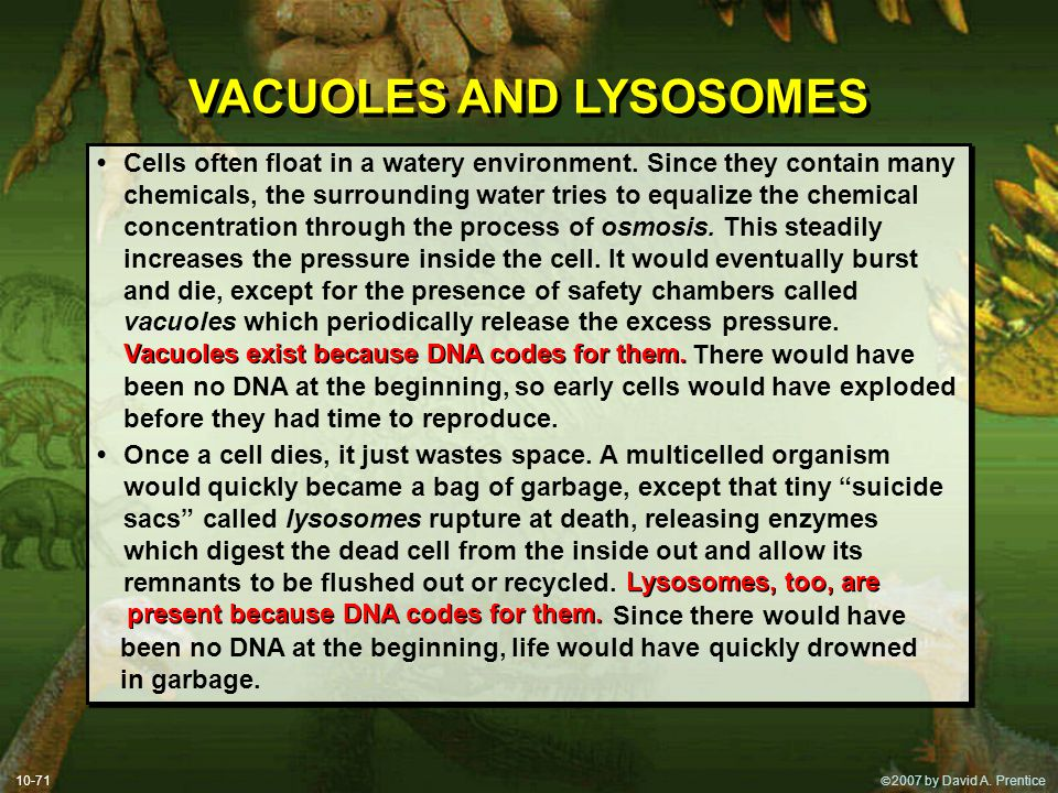  2007 by David A. Prentice 10-71 VACUOLES AND LYSOSOMES Cells often float in a watery environment. Since they contain many chemicals, the surroundin