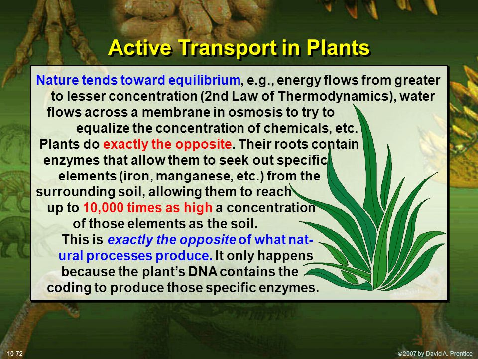  2007 by David A. Prentice 10-72 Active Transport in Plants Nature tends toward equilibrium, e.g., energy flows from greater to lesser concentration