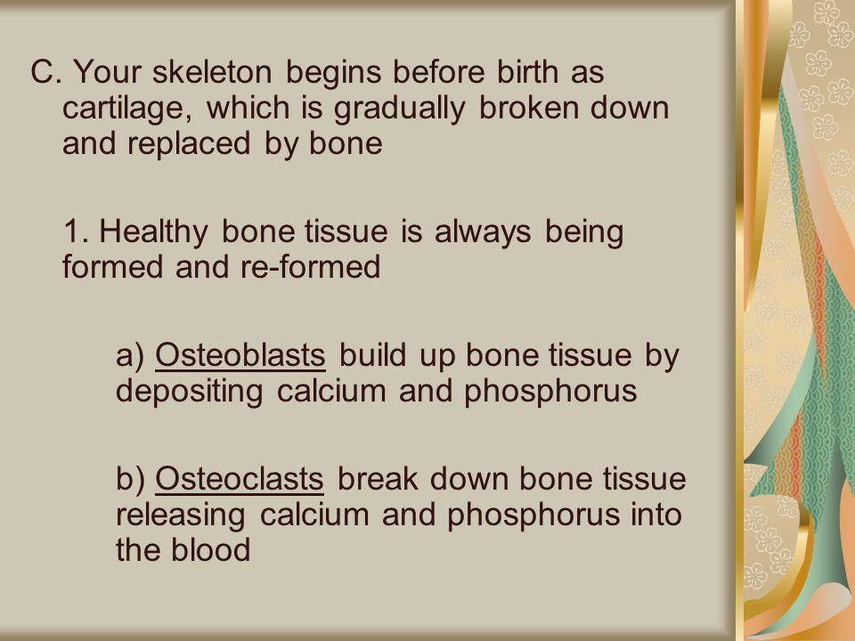 F.Human Bones 1. Human body has 206 bones 2.