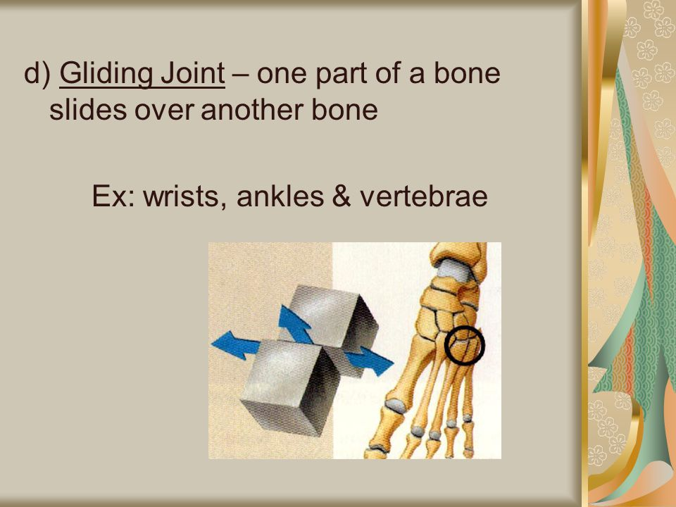 e) Saddle Joint – moves back and forth up and down Ex: thumbs