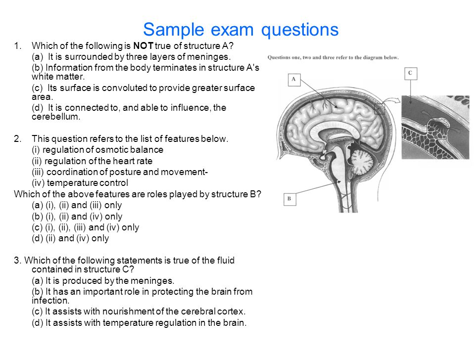 Sample exam questions 1. Which of the following is NOT true of structure A? (a) It is surrounded by three layers of meninges. (b) Information from the