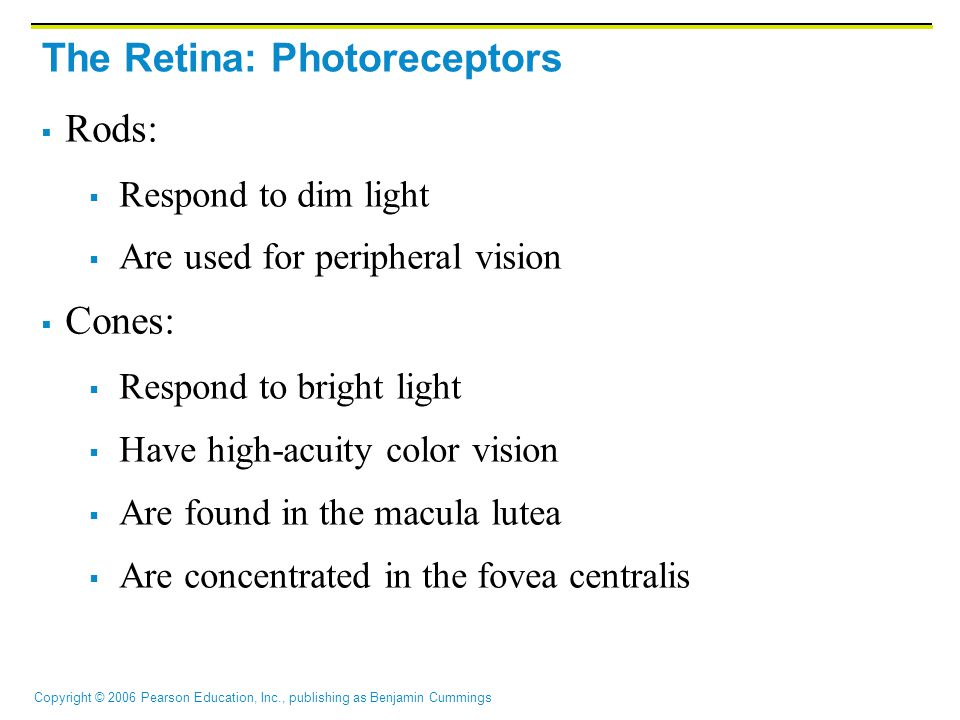 Copyright © 2006 Pearson Education, Inc., publishing as Benjamin Cummings The Retina: Photoreceptors  Rods:  Respond to dim light  Are used for per