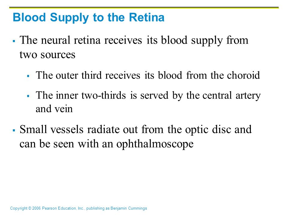 Copyright © 2006 Pearson Education, Inc., publishing as Benjamin Cummings Blood Supply to the Retina  The neural retina receives its blood supply fro