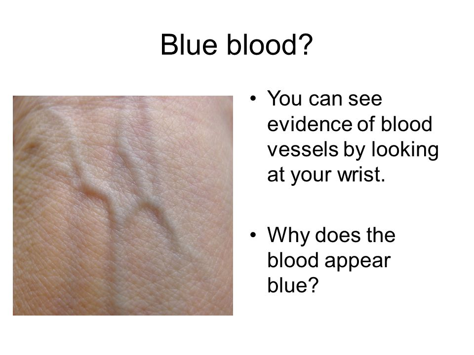 Blue blood? You can see evidence of blood vessels by looking at your wrist. Why does the blood appear blue?