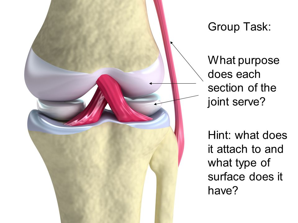 Task Group Task: What purpose does each section of the joint serve? Hint: what does it attach to and what type of surface does it have?