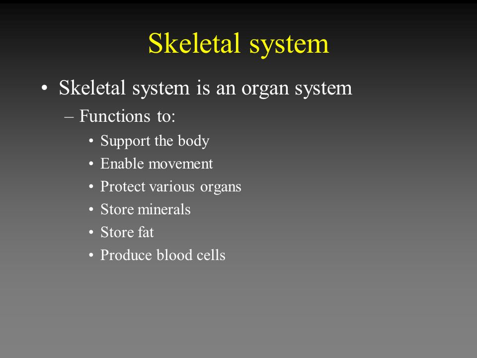 Skeletal system is an organ system –Functions to: Support the body Enable movement Protect various organs Store minerals Store fat Produce blood cells