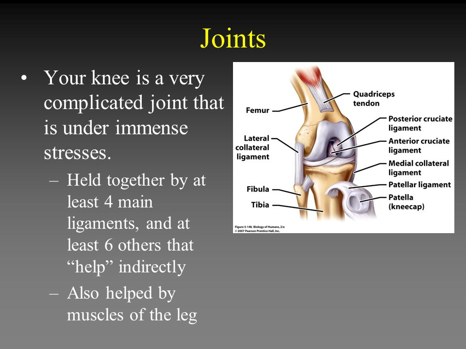 Joints Your knee is a very complicated joint that is under immense stresses.
