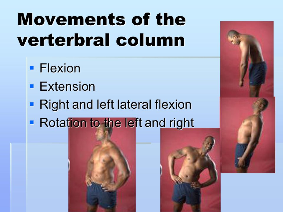 Movements of the verterbral column  Flexion  Extension  Right and left lateral flexion  Rotation to the left and right
