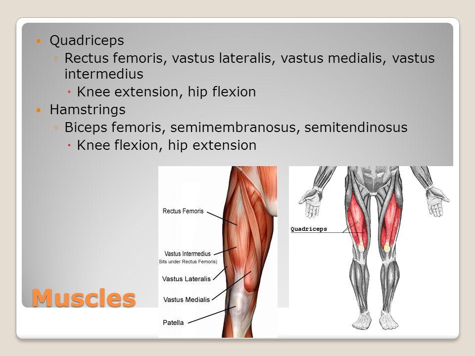 Muscles Quadriceps ◦Rectus femoris, vastus lateralis, vastus medialis, vastus intermedius  Knee extension, hip flexion Hamstrings ◦Biceps femoris, se