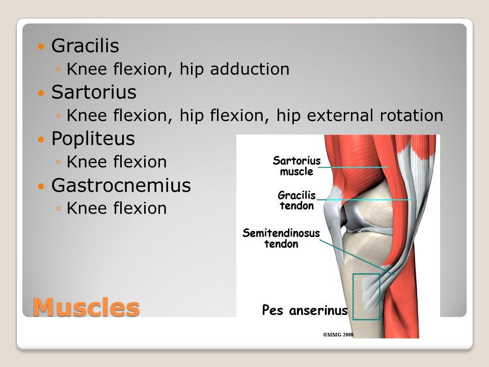 Muscles Gracilis ◦Knee flexion, hip adduction Sartorius ◦Knee flexion, hip flexion, hip external rotation Popliteus ◦Knee flexion Gastrocnemius ◦Knee
