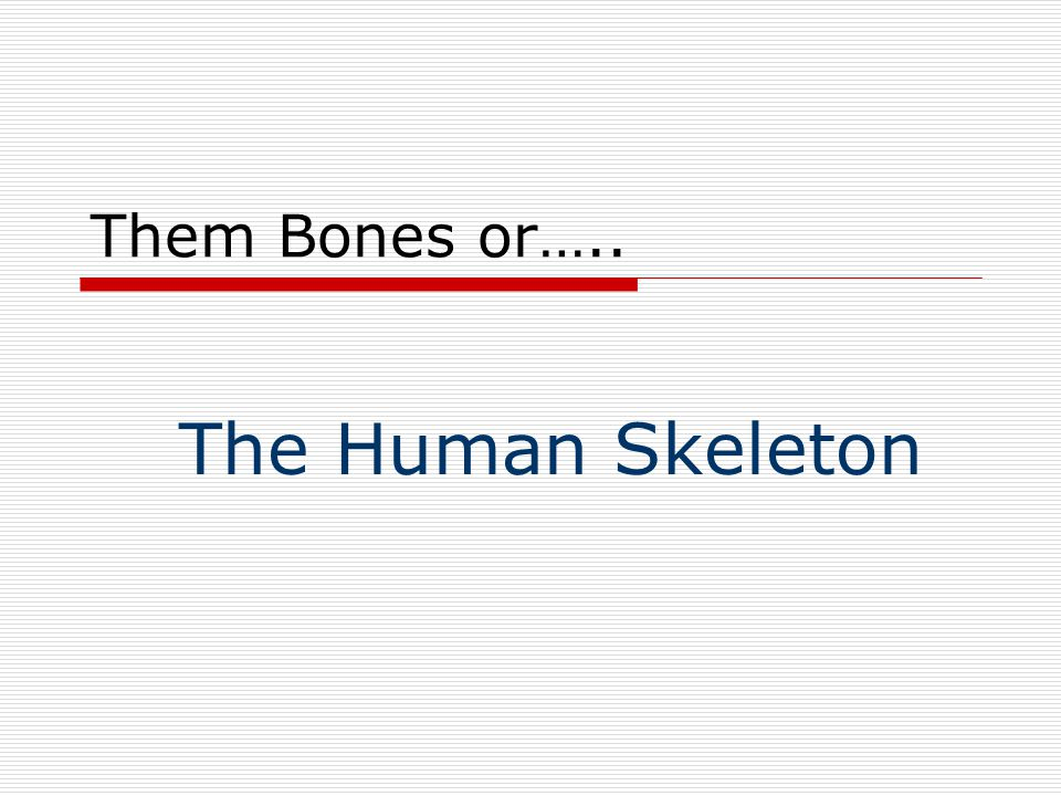 Them Bones or….. The Human Skeleton