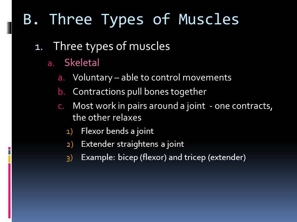 1.Three types of muscles a.