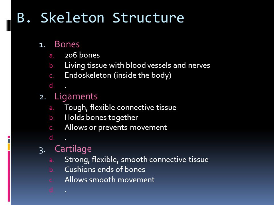 B.Skeleton Structure 1. Bones a. 206 bones b. Living tissue with blood vessels and nerves c.
