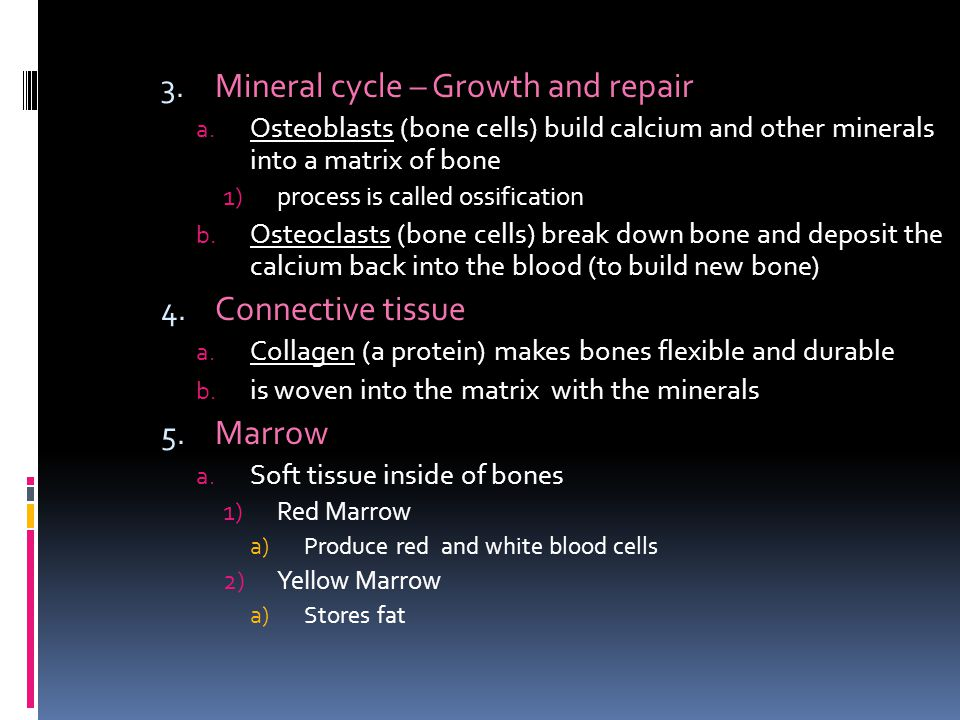 3.Mineral cycle – Growth and repair a.