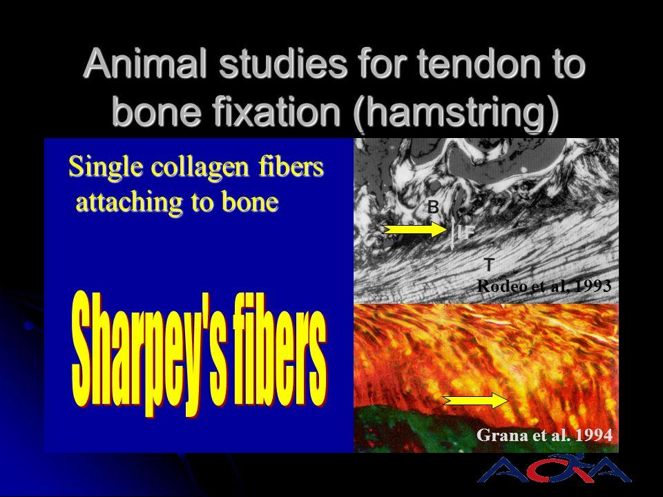 Animal studies for tendon to bone fixation (hamstring) Extra-articular model Intra-articular model Rodeo et al, 1993 Grana et al. 1994 Single collagen