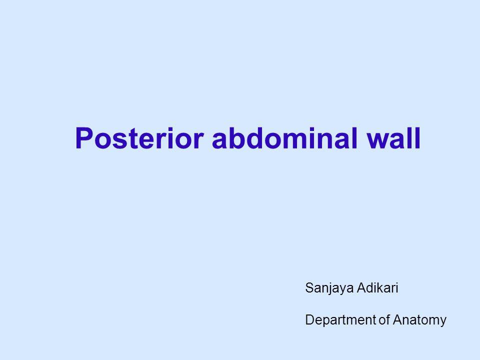 Posterior abdominal wall Sanjaya Adikari Department of Anatomy