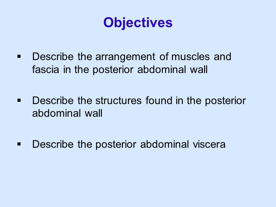 Objectives  Describe the arrangement of muscles and fascia in the posterior abdominal wall  Describe the structures found in the posterior abdominal
