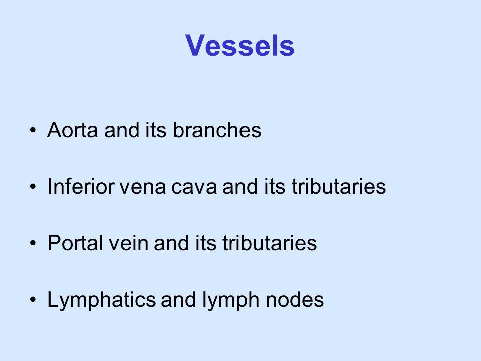 Vessels Aorta and its branches Inferior vena cava and its tributaries Portal vein and its tributaries Lymphatics and lymph nodes